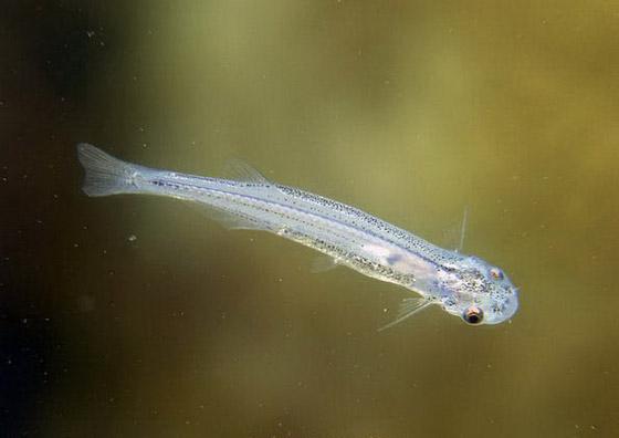 食人鱼水蟒电鳗 世界上13种最可怕的淡水动物【13】