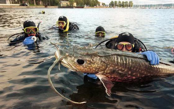 食人鱼水蟒电鳗 世界上13种最可怕的淡水动物【5】