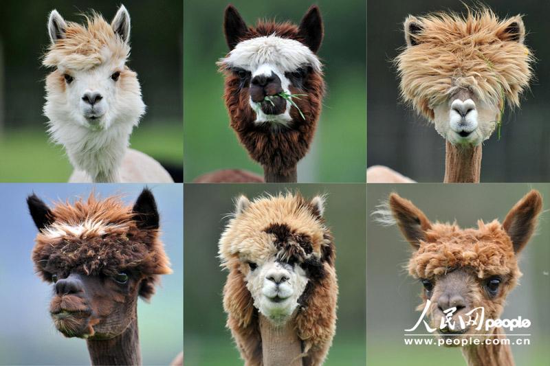 盘点动物界的奇葩发型(组图)