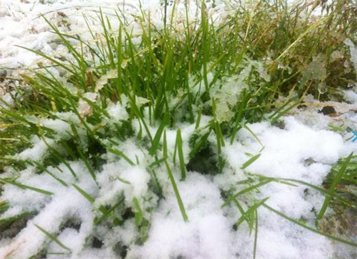 组图:新疆八月飞雪打雪仗 内地高温区网友羡慕