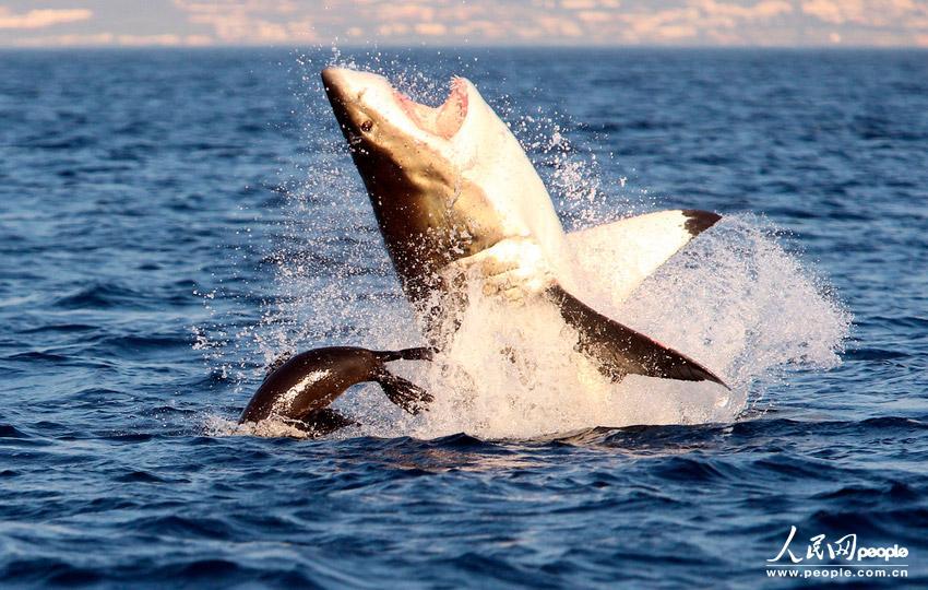 2013野生动物惊险瞬间 -2013野生动物惊奇瞬间图片