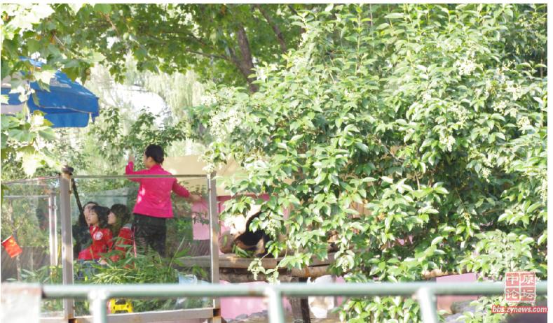 一个穿红衣裳的女孩不停的将食物戳在棍子上喂食,以控制熊猫配合交过费用的游客拍照。这种不停的喂食方式对熊猫是好事还是坏事?(图片来源网络)