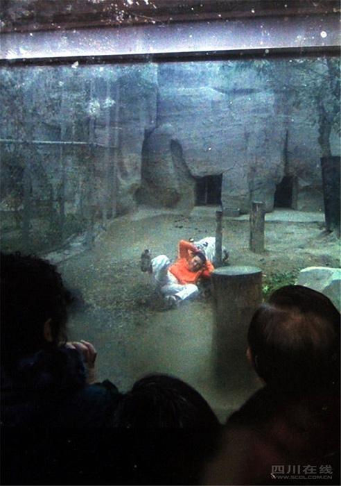 2月16日,一男子翻入成都动物园白虎曾舍,惊险的一幕被游客用手机拍下。