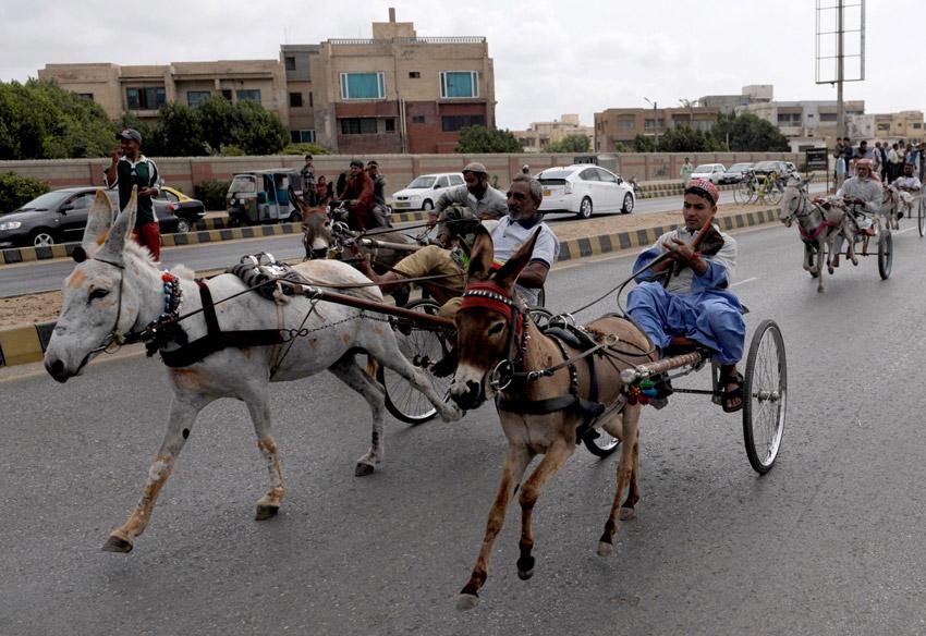 巴基斯坦卡拉奇:驴车赛跑【3】--图片频道--人