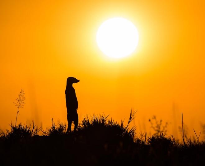 动物摄影师非洲近距离实拍萌物狐獴【12】