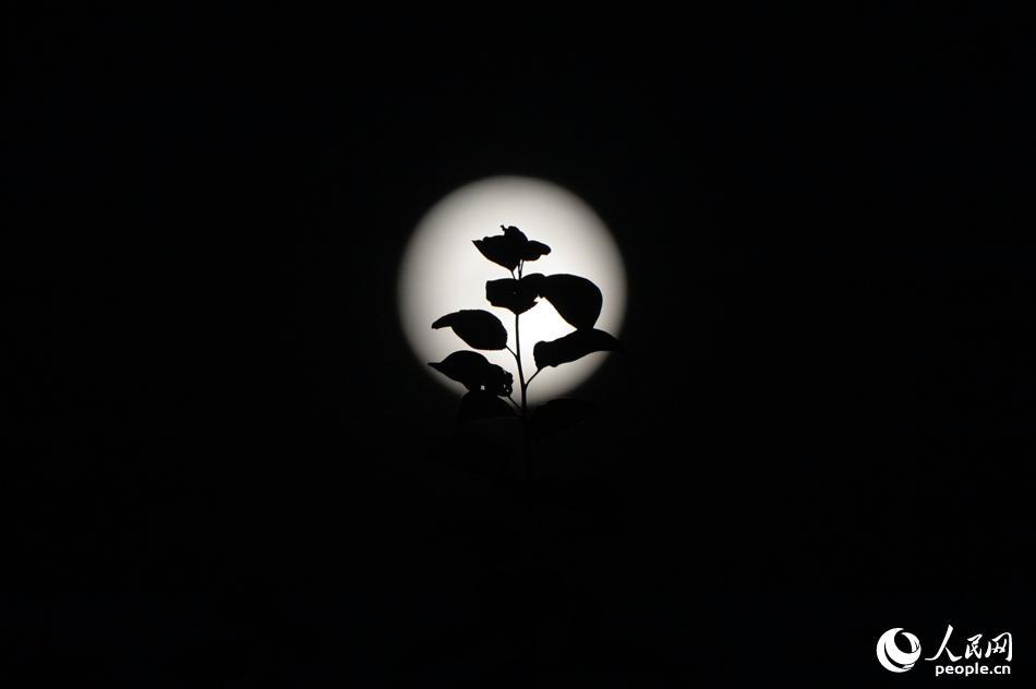 """北京上空的""""超级月亮""""格外迷人。(人民网记者 翁奇羽 摄)"""