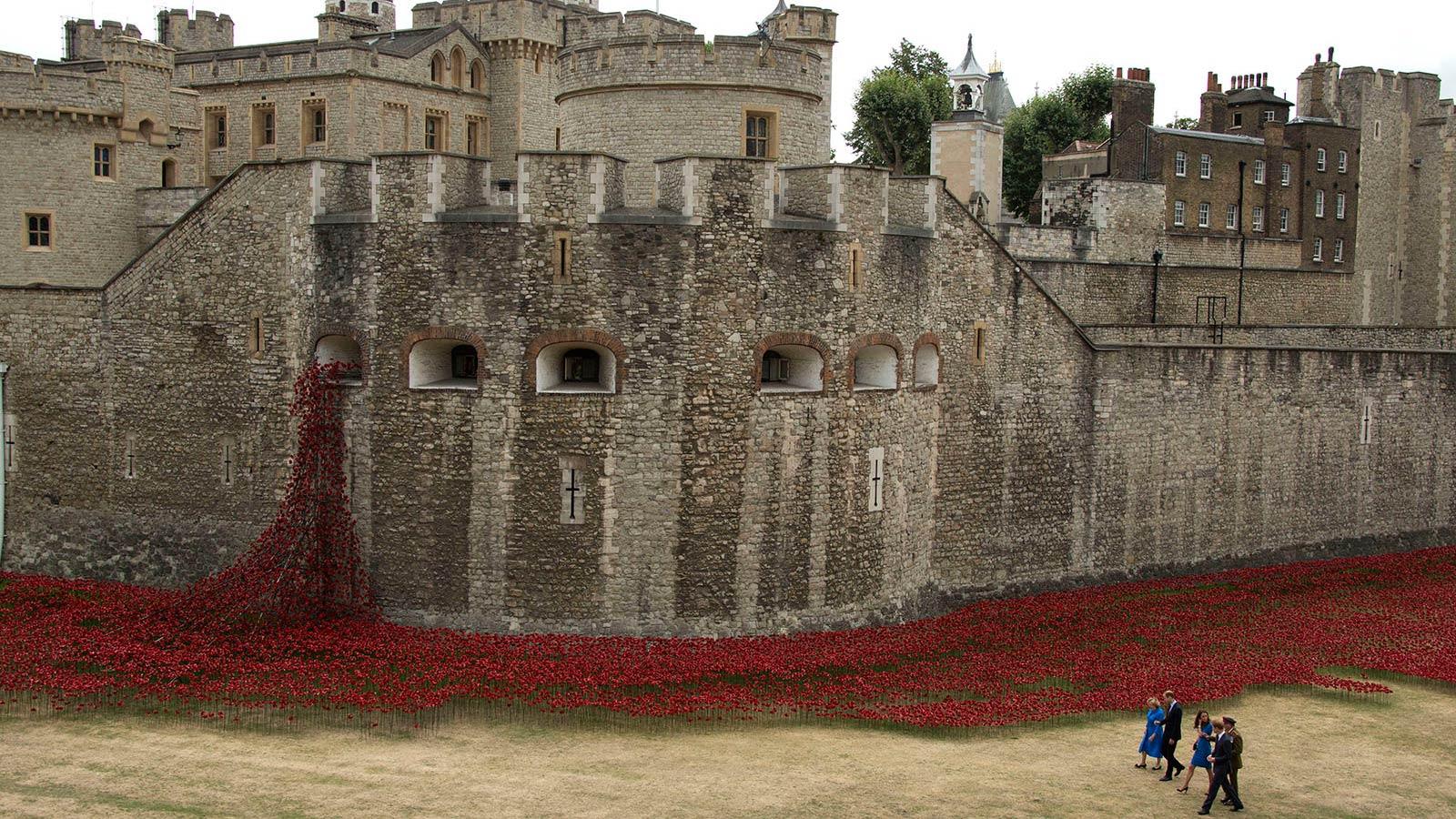 红色罂粟花从伦敦塔的