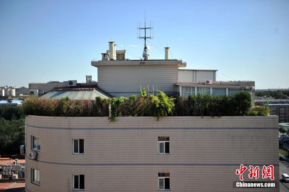 北京一大厦楼顶建 空中花园 或被执行强拆