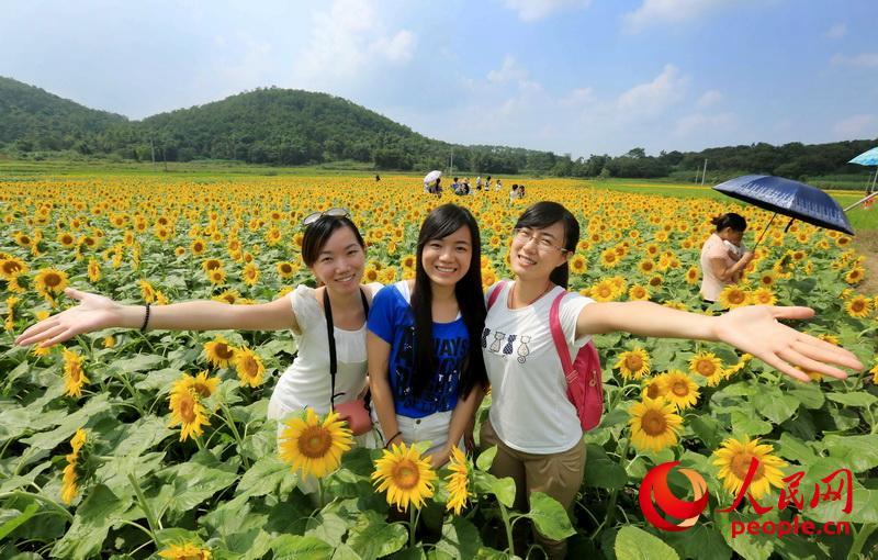 广西柳州:向阳花海醉游人【2】