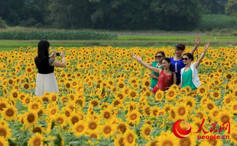 广西柳州:向阳花海醉游人【4】