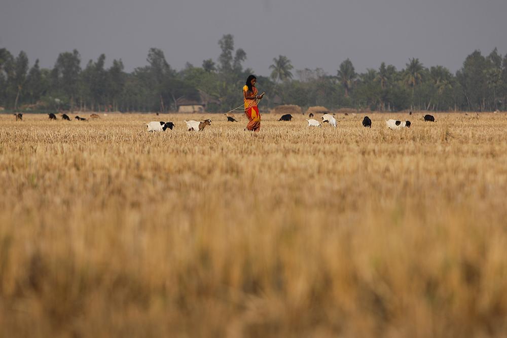 /印度西孟加拉邦恒河三角洲的风土人情