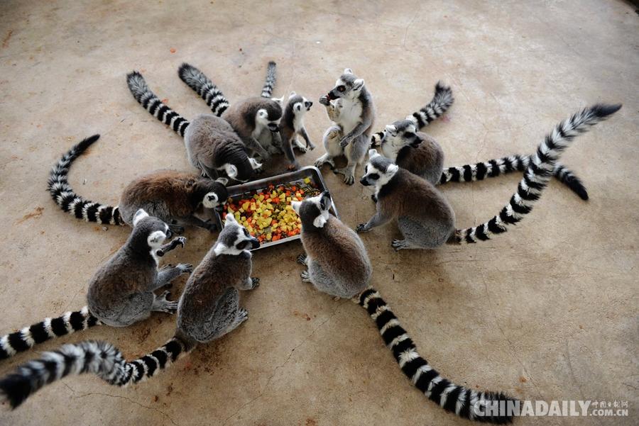山东青岛森林野生动物世界