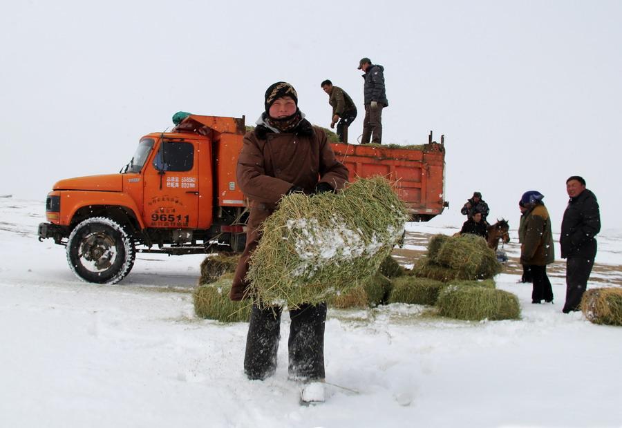 """新疆阿勒泰政府网站_新疆阿勒泰:抗灾保畜为农牧民""""雪中送炭""""--图片频道--人民网"""