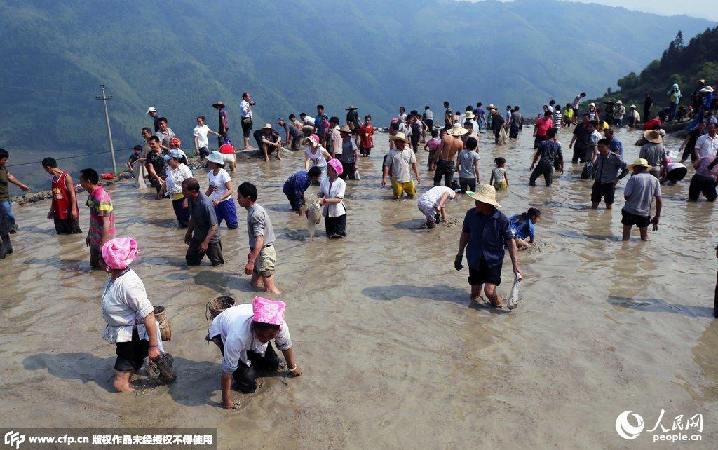 办传统对山歌、农事活动、摸鱼、爬梯田等系列民俗文化活动,迎接