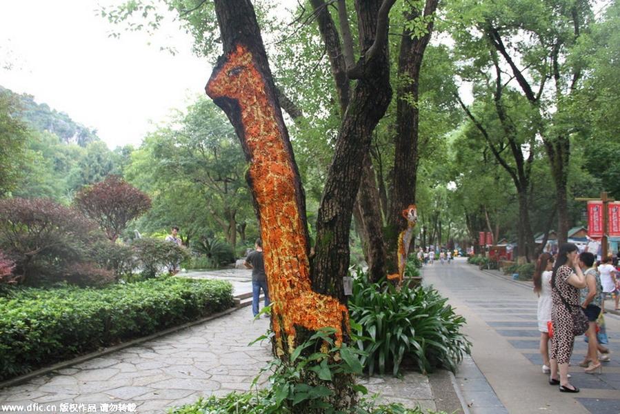 桂林七星公园树干画出动物世界