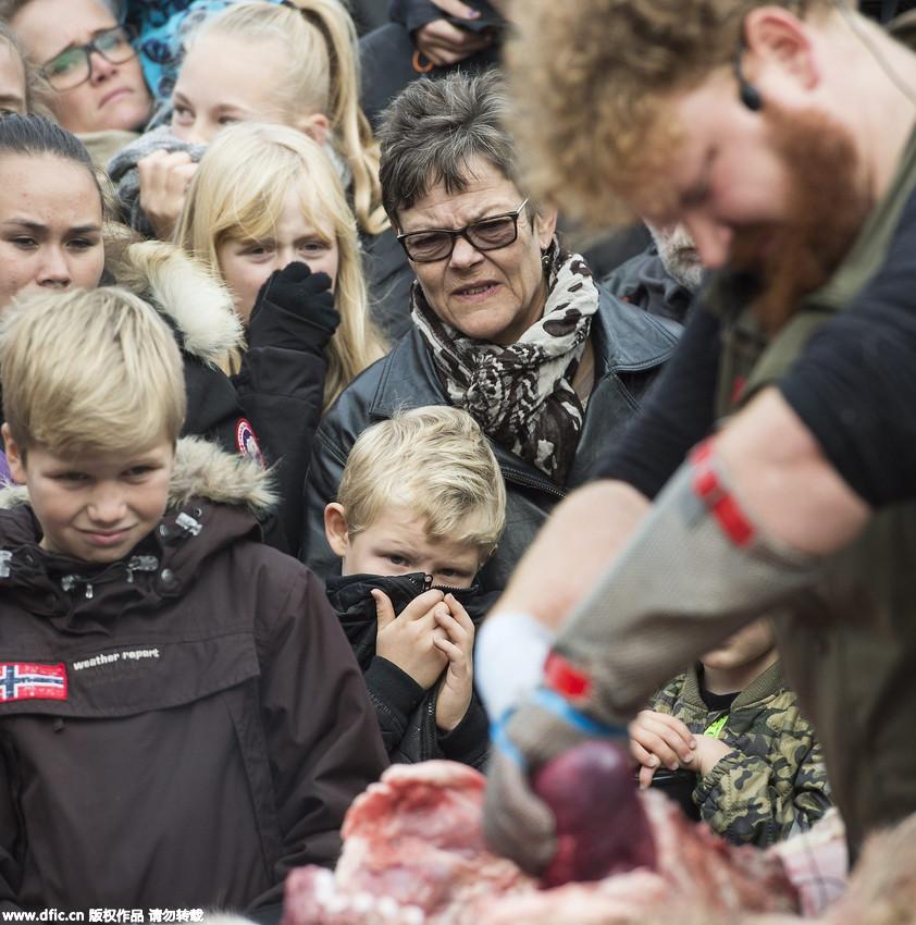 丹麦动物园公开解剖小狮子 儿童现场围观场面血腥