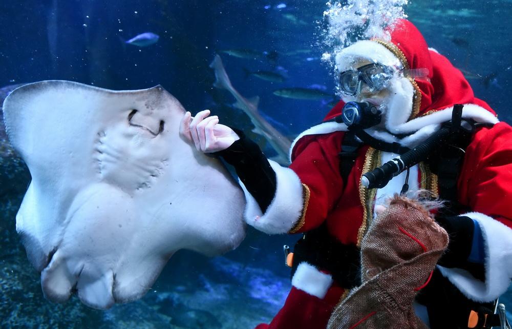水族馆里的圣诞老人