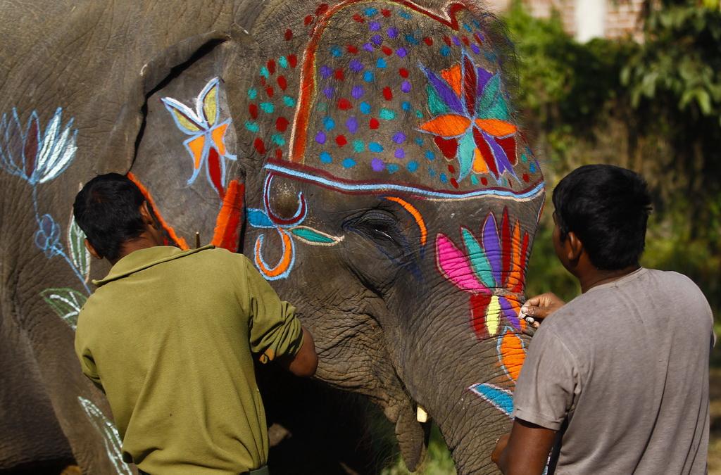 尼泊尔举办大象选美比赛