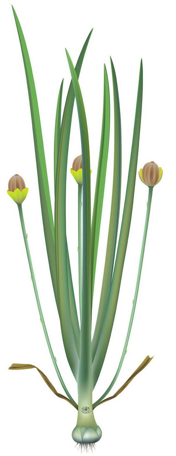 我国科学家发现世界上最早的草本被子植物