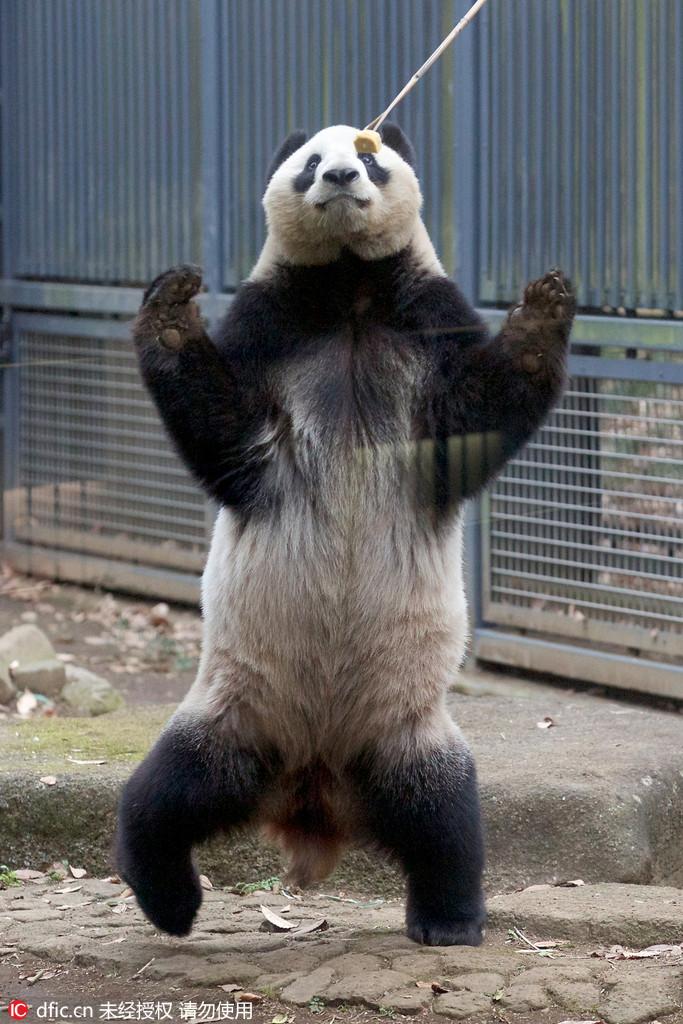 日本动物园上演真实版 图片