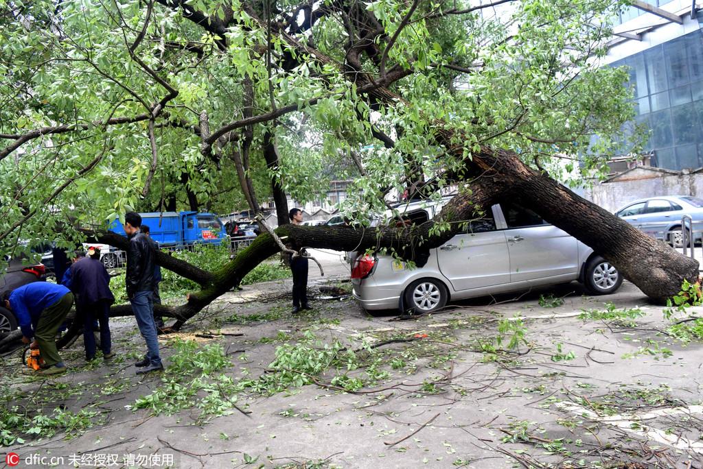 多棵大树被连根拔起