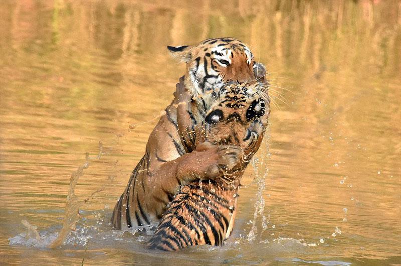 河中洗澡嬉戏 画面温情 图