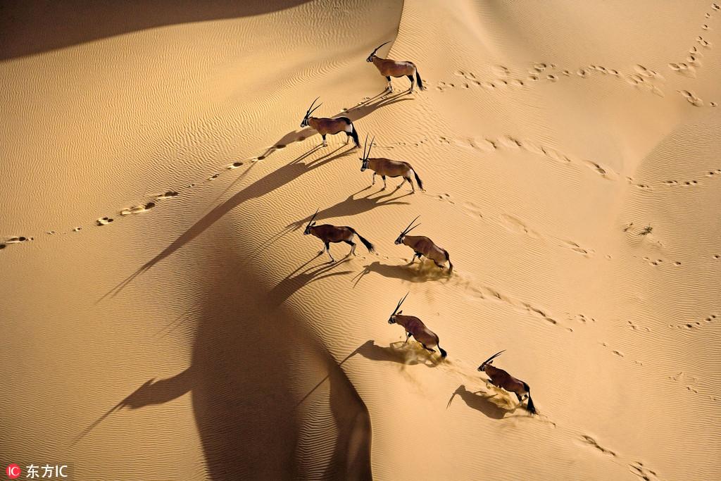 震撼航拍:上帝视角下的非洲大陆和野生动物世界