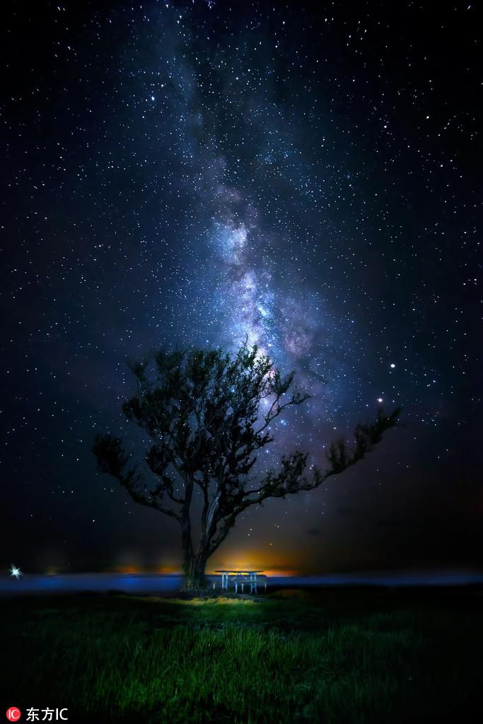 沼泽风情:星空璀璨魅惑动物慵懒惬意