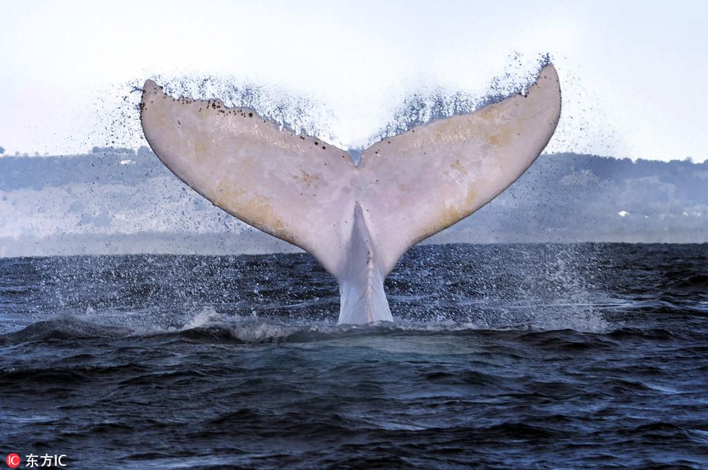 壁纸 动物 海洋动物 桌面 1024_679