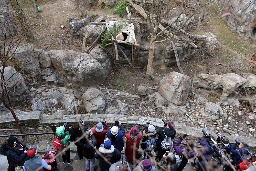 """2月16日,游客在美国华盛顿国家动物园观看大熊猫""""宝宝""""."""