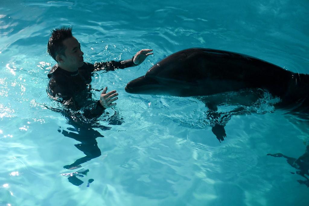 """【图片新闻】两头宽吻海豚""""定居""""哈尔滨 - 耄耋顽童 - 耄耋顽童博客 欢迎光临指导"""