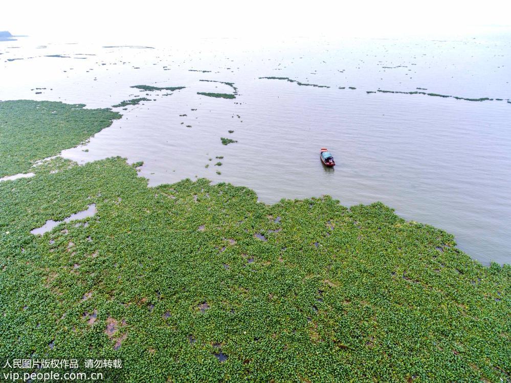 强降雨致鄱阳湖快速逼近警戒水位