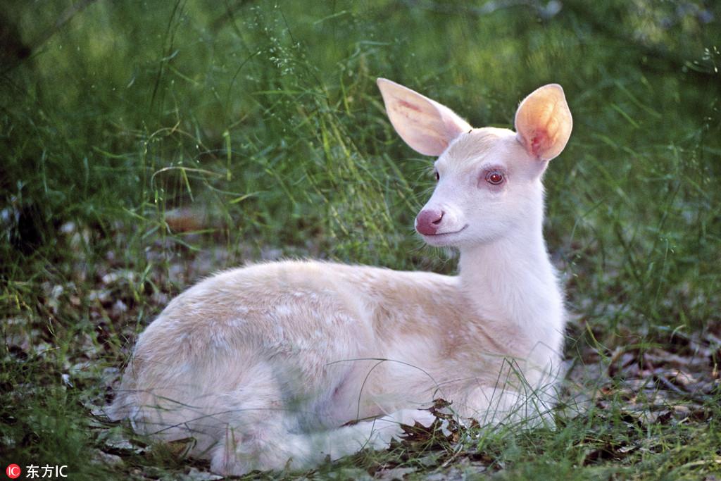 罕见白色动物 全身雪白萌态十足