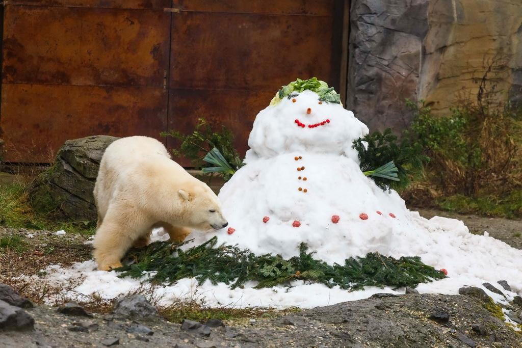 12月19日,在德国汉诺威的一个动物园,北极熊米兰娜查看用食物装饰的雪人。  12月19日,在德国汉诺威的一个动物园,企鹅查看圣诞礼物盒里的鱼。  12月19日 ,在德国汉诺威的一个动物园,猫鼬们查看圣诞礼物盒里的食物。  12月19日,在德国汉诺威的一个动物园,黑猩猩们打开装着水果的圣诞礼物盒。  12月19日,在德国汉诺威的一个动物园,企鹅们查看圣诞礼物盒里的鱼。  12月19日 ,在德国汉诺威的一个动物园,猫鼬们查看圣诞礼物盒里的食物。  12月19日,在德国汉诺威的一个动物园,北极熊米兰娜