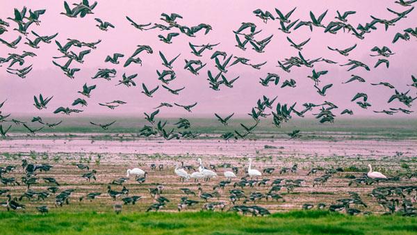 第二届中国·都昌鄱阳湖候鸟全国摄影大展征稿启事