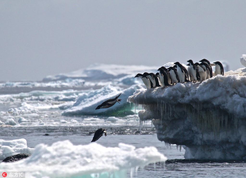 科学家在南极新发现巨大企鹅栖息地