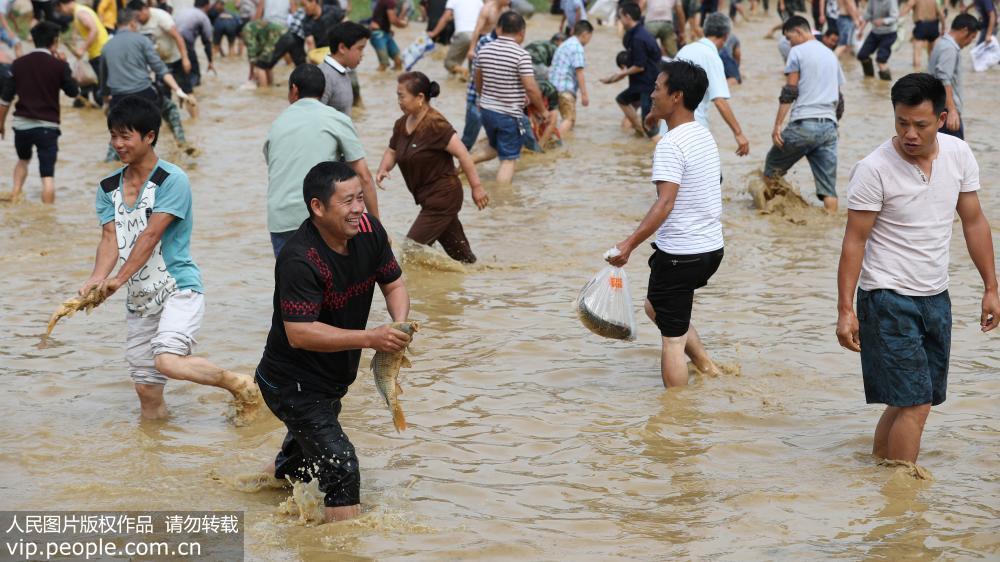 贵州玉屏 水田抓鱼享清凉