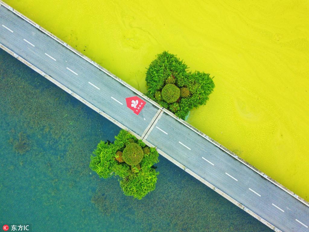 无锡太湖黄色蓝藻泛滥 一堤之隔,二个不同