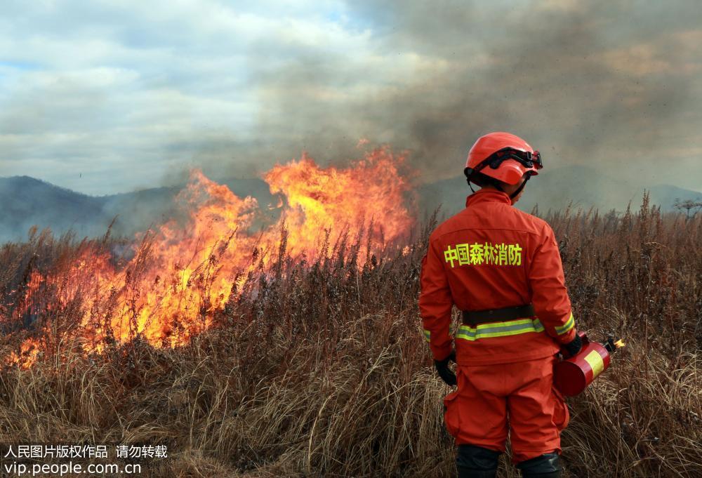 黑龙江大兴安岭开展计划烧除 预防森林火灾