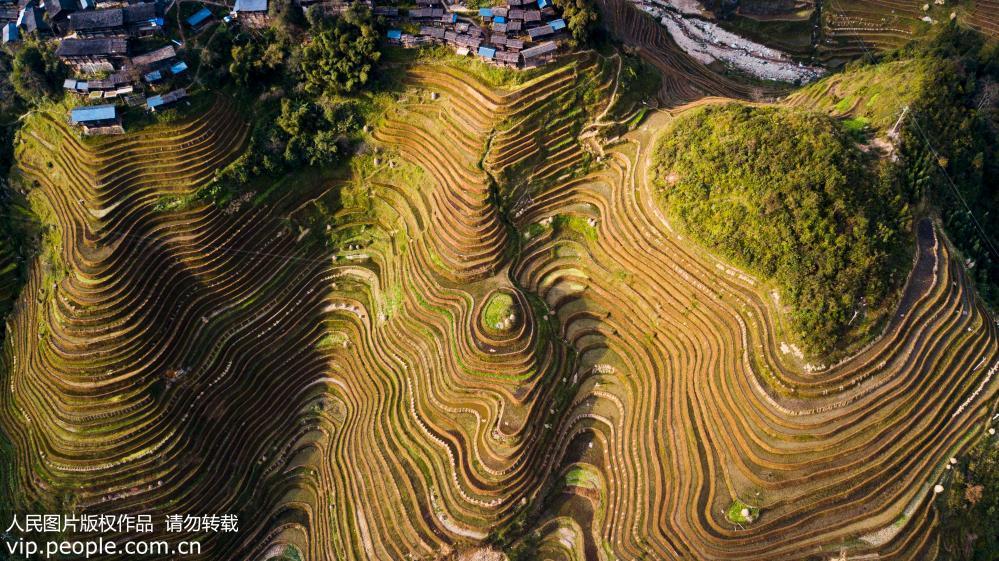 11月4日,拍摄的贵州省从江县加榜乡加榜梯田。(无人机拍摄)