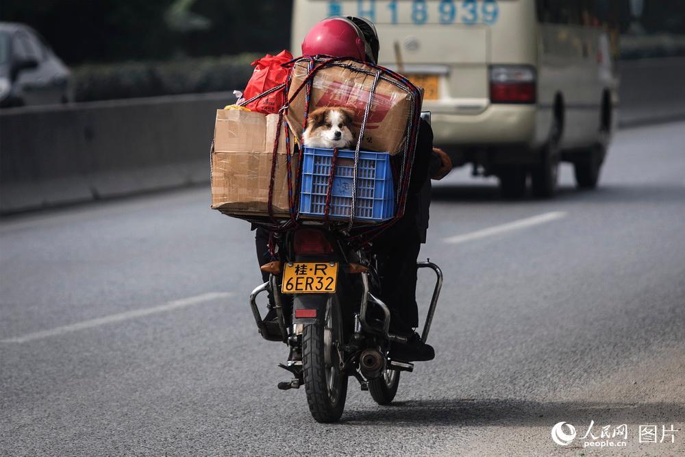 2019年1月25日,广东肇庆,鼎湖山服务区。人回家过年身边的宠物狗也随行,迁徙的旅途中彼此相伴。