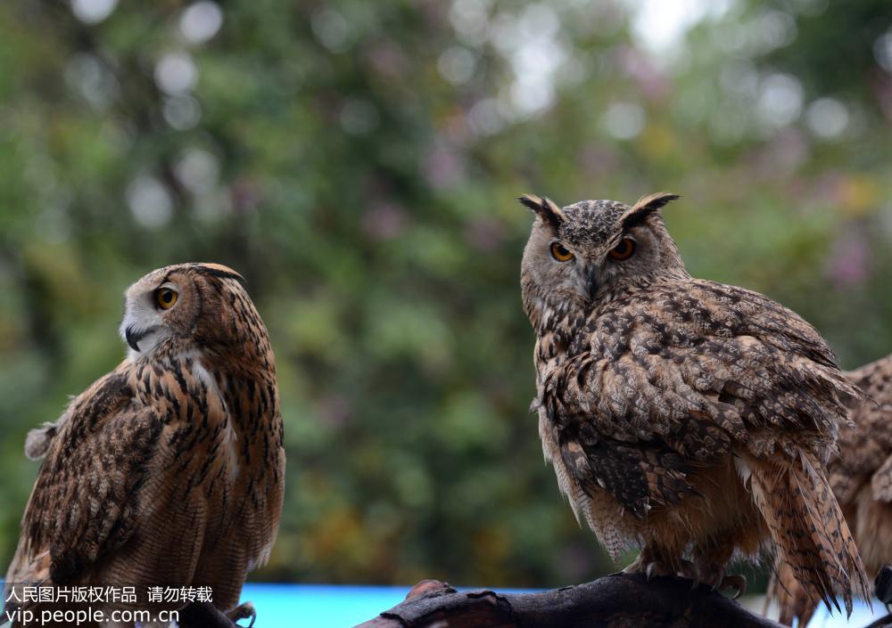 """广州:""""爱鸟周""""启动猴面鹰等珍稀鸟"""