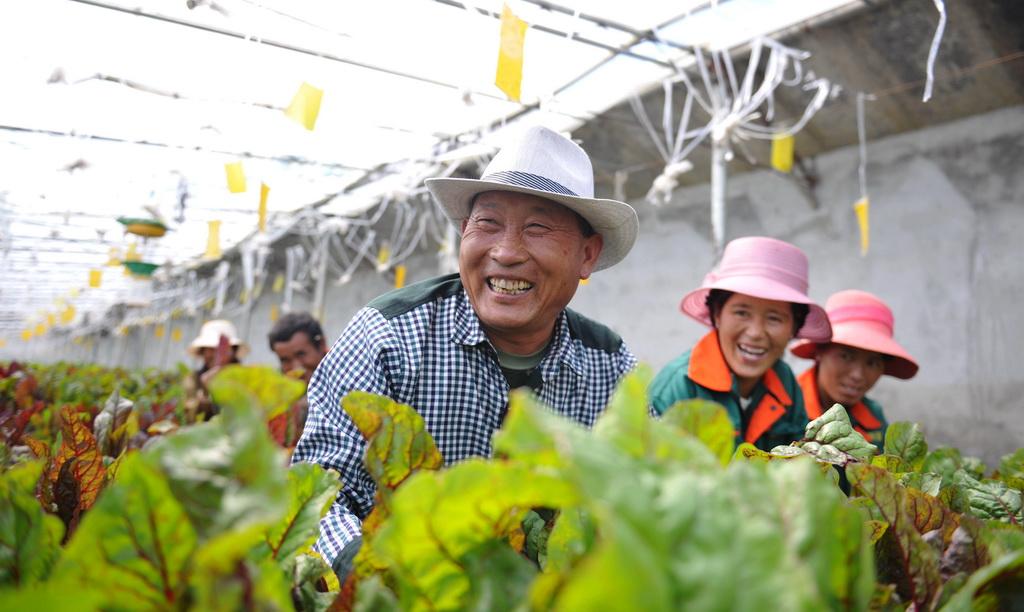 西藏日喀则白朗县科技特派员张际明在辅导当地农民学习温室大棚种植技术(2016年8月28日摄)。  新华社记者 晋美多吉 摄