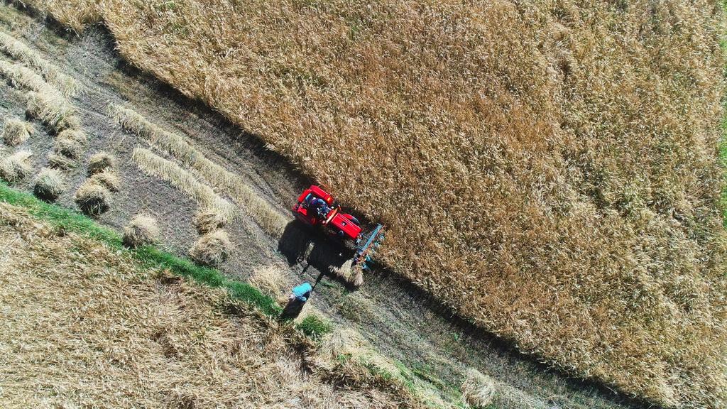 西藏定日县农民在收割青稞(2018年9月13日无人机拍摄)。新华社记者 普布扎西 摄