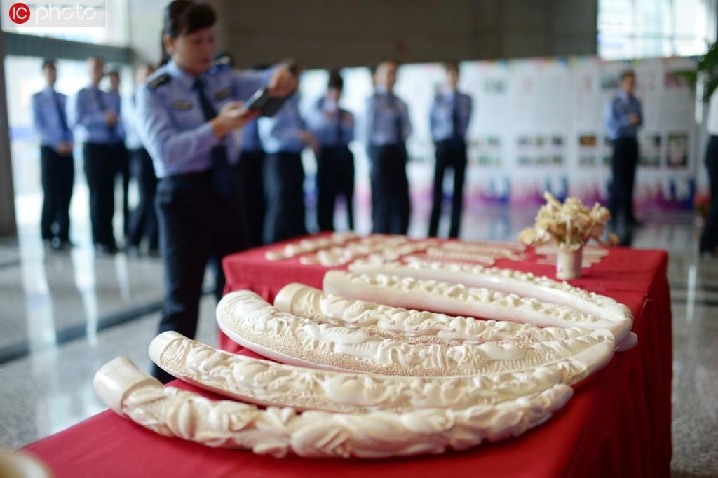 杭州海关移交2200件象牙等濒危物种制品