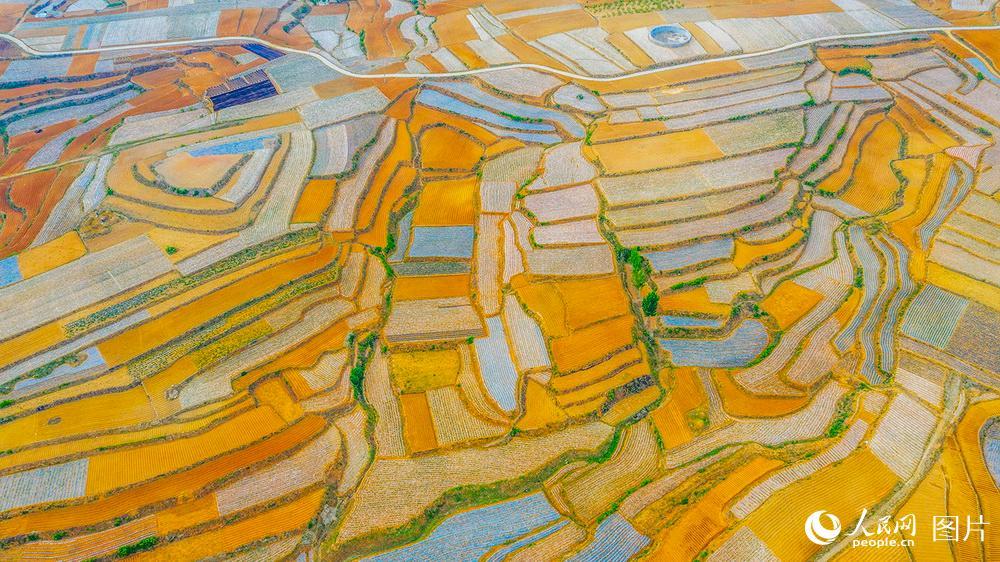 山东费县在山区设立集中脱粒点,为农民免费打麦。麦秸由脱粒点回收再利用。此举既防止农民焚烧秸秆污染环境和山火,又使资源得到再利用。陆启辉摄