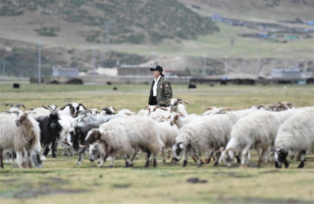 坚热益西在自家牧场放羊(7月13日摄)。新华社记者 普布扎西 摄