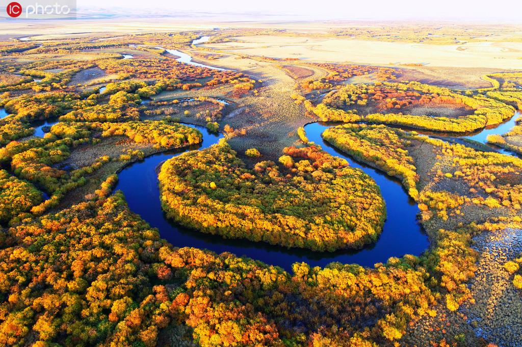 航拍内蒙古金秋弯曲的扎敦河 满眼金黄美不胜收