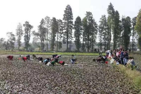 http://www.xqweigou.com/dianshangB2B/76981.html