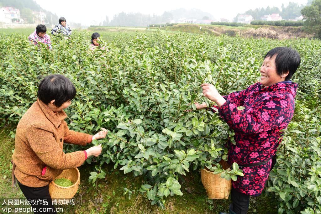 浙江杭州建德市为民办事件件实在--图片频道--人民网